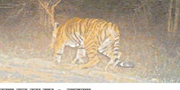 रोहतास के कैमूर पहाड़ी वन्यप्राणी क्षेत्र में बाघों की हलचल के बाद टाइगर कॉरिडोर बनाने का काम शुरू