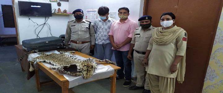 रायपुर : तेंदुए की खाल के साथ दो तस्कर गिरफ्तार